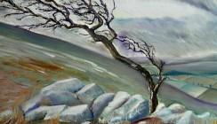 Windswept Dartmoor